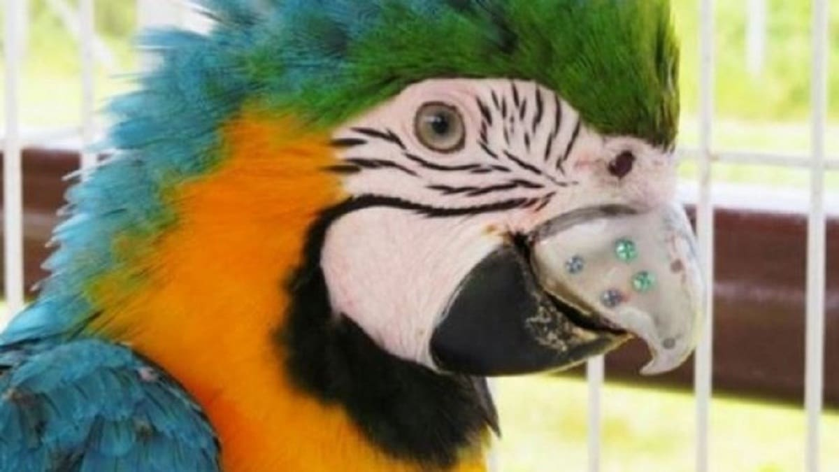 Can you 3D print a parrot