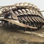 Scientist 3D printed trilobites